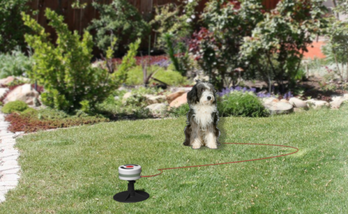 Electronic Dog Tether Design